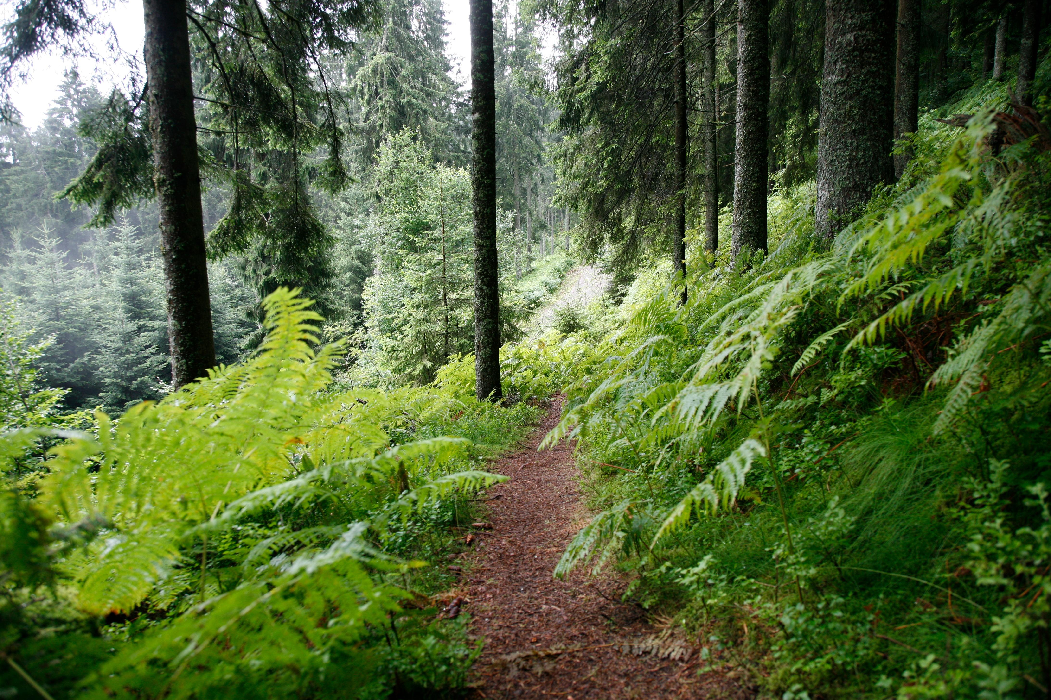 Alte Holzmacherpfade