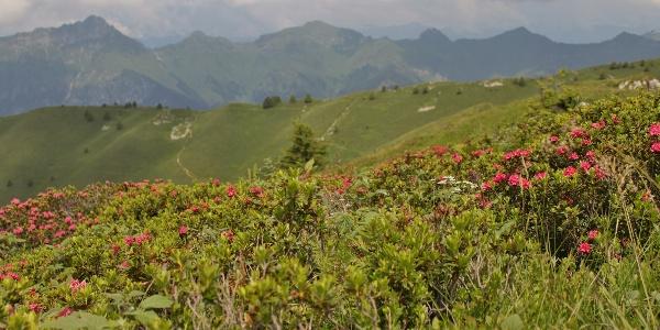 Montagne intorno a Parì