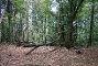 Naturbelassene Waldstücke im Naturschutzgebiet