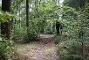 Wegeführung mitten durch den Wald