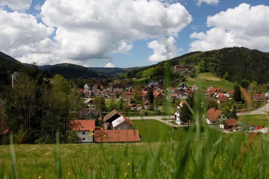 NW Tour 8 - Zum Hirschauer Wald in Obertal-Buhlbach