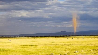 Gnus vor einem Wirbelsturm im Amboseli Nationalpark