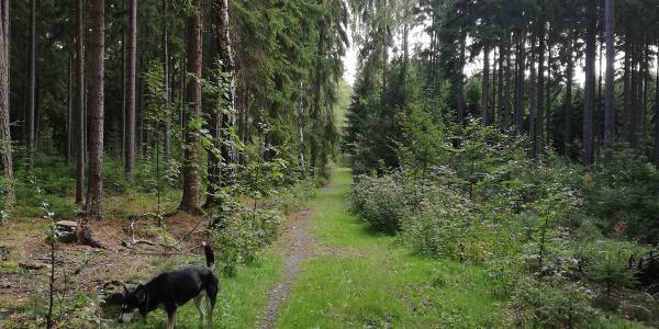 Waldweg am Beginn der Wanderung