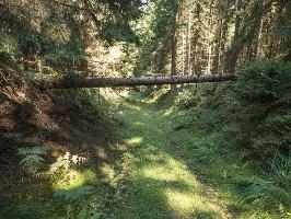 Foto Forstweg in Richtung Gohrisch