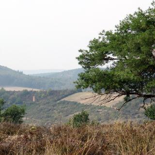 Heidelandschaft auf dem Muehlberg