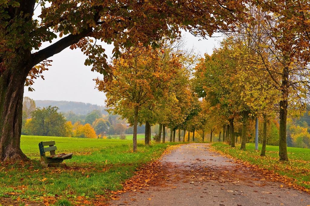 Herbst auf dem Weg zum Gut Dietlhofen in Weilheim ()