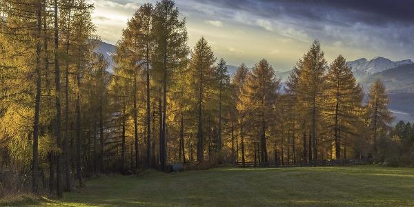 Im Herbst verleihen die gelb leuchtenden Lärchen dem Schalensteinwäldchen bei Luns einen ganz besonderen Zauber