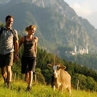 Wanderer und Kalb vor Schloss Neuschwanstein