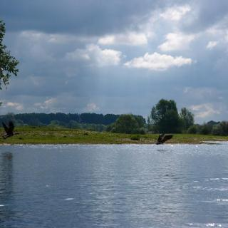 Asselter See