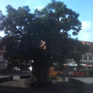 Dorflinde Nentershausen
