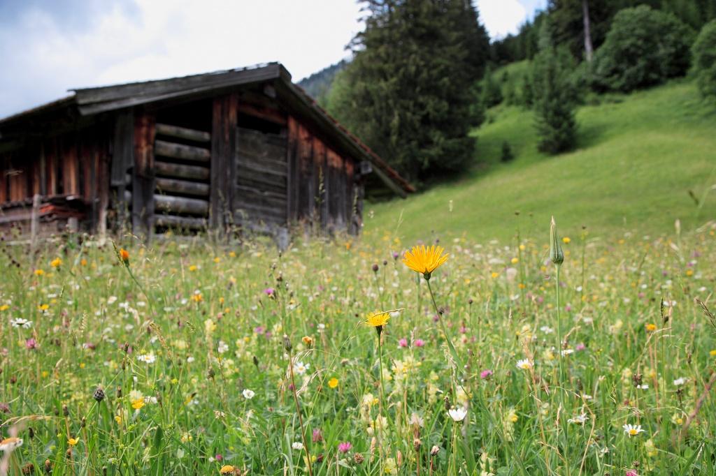 Bergwiese mit Stadl - @ Autor: Pfronten Tourismus - © Quelle: Pfronten Tourismus/E.Reiter