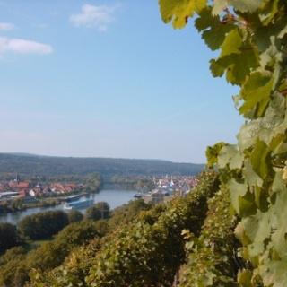 Blick auf die Erlenbacher Weinberge