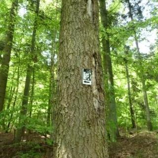 Andeler Wald