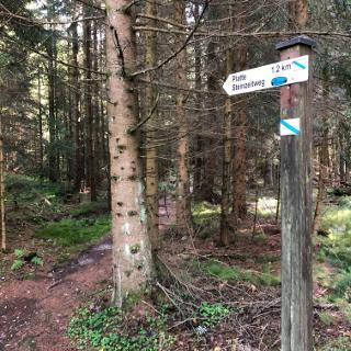 Tourbeginn direkt in den Wald