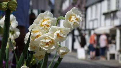 Frühlingserwachen in Freudenberg