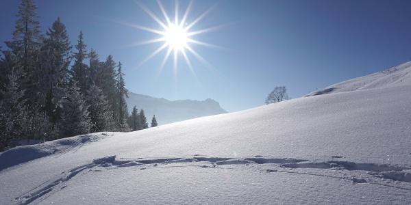 Verschneite Märchenwelt auf der Marbachegg