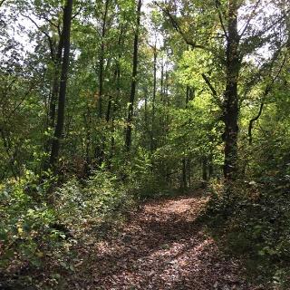 Weg durch das Bürgerholz