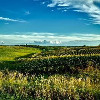 Corn field, Iowa
