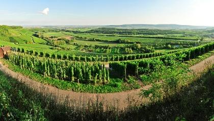 Brackenheim - Zweifelberg