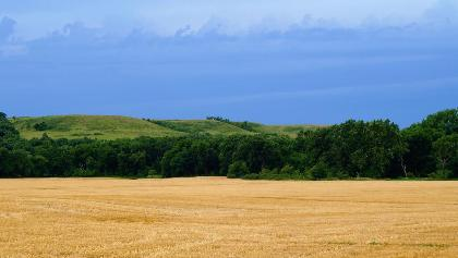 Wheat field, Kansas
