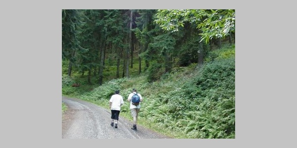Waldweg zur Roten Lache