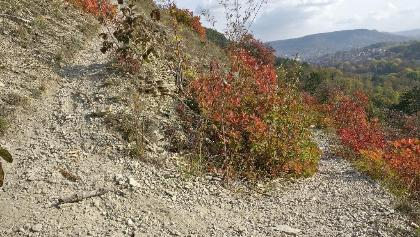 Serpentinen am Nasenberg (Herbst)