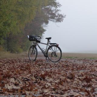 Herbst bei Horn
