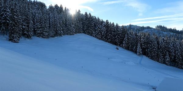 Winterwald bei der Wolfgrube.