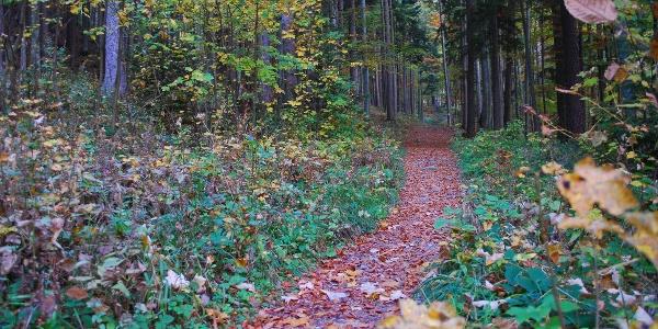 Herbstlicher Zustieg zum Knappenhof