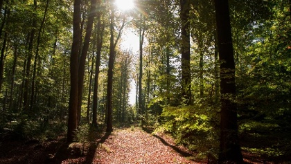 Rodter Wald