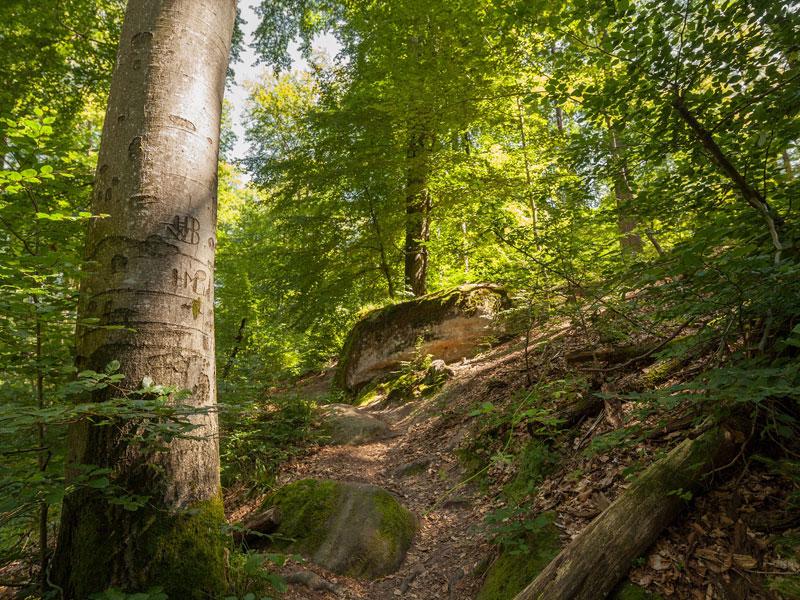 Bodenbachschlucht   - © Quelle: Agentur arcos