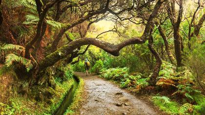 Madeira - Der grüne Nordosten