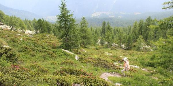 Passo Quadrella