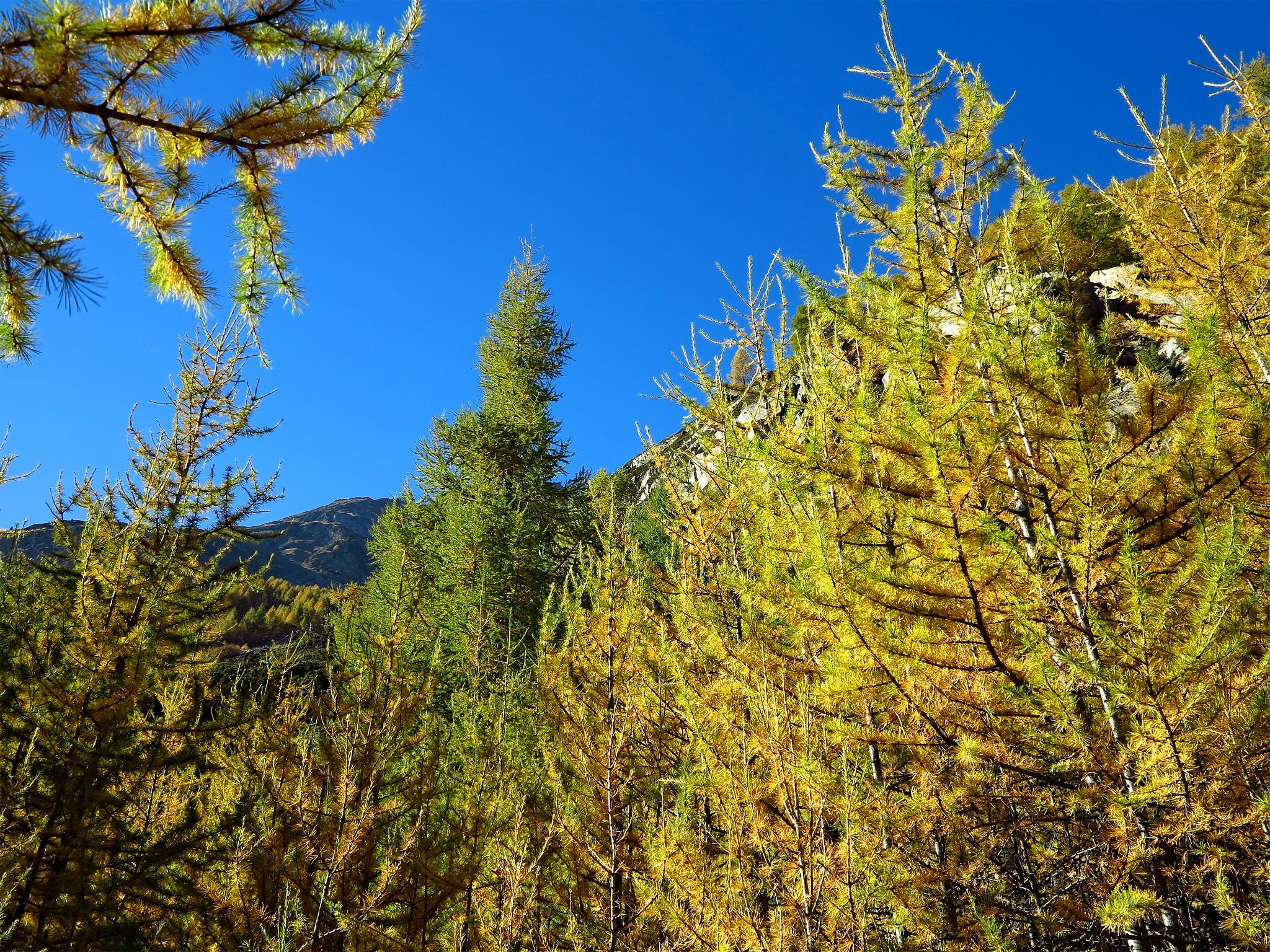 Über Randa • Von » Täsch Nach Zermatt Wanderung qzMGSUpV