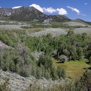 Pine Forest Range