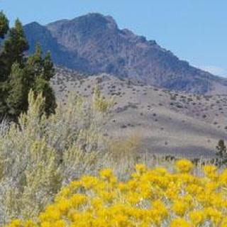 South Jackson Mountains Wilderness