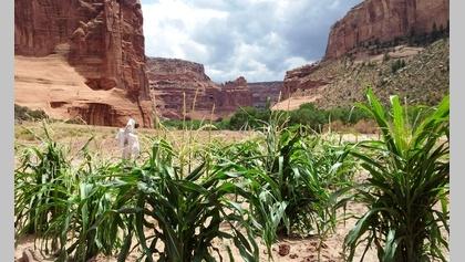 Canyon Farm