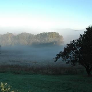Fog in a meadow