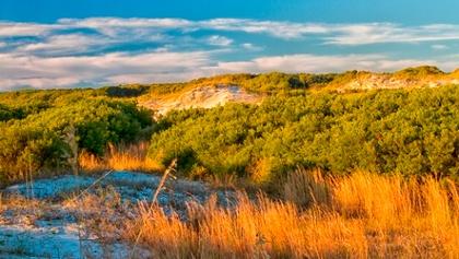 Vegetated Dunes