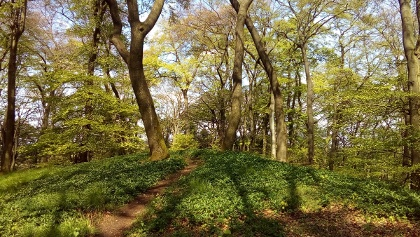 Schöner Waldpfad durch den Teutoburger Wald