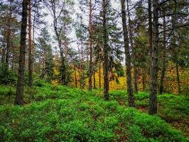 Foto Herbststimmung auf den Bärenfangwänden