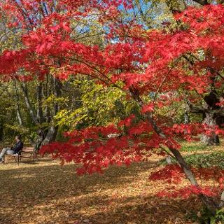 A Budai Arborétum