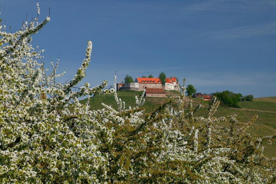 Durbach - Über den Ortenauer Weinpfad zum Schloss Staufenberg