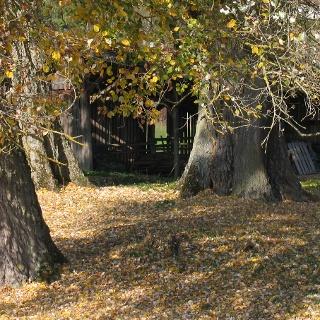 Baumgruppe bei Mauren