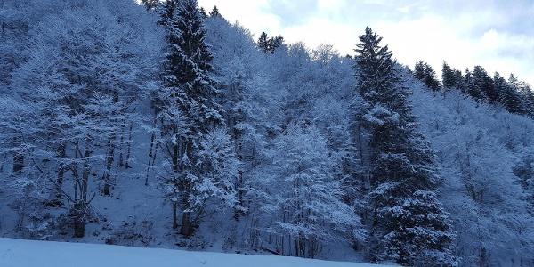 9_Winterwald