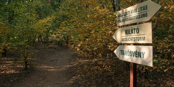 Tanösvény a Pákozd-Sukorói Arborétumban