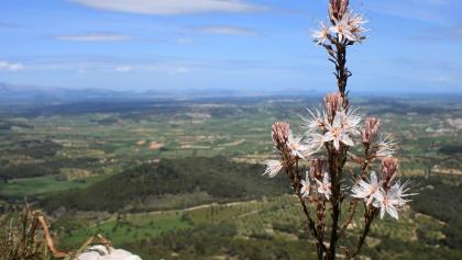 Views from Puig de Randa