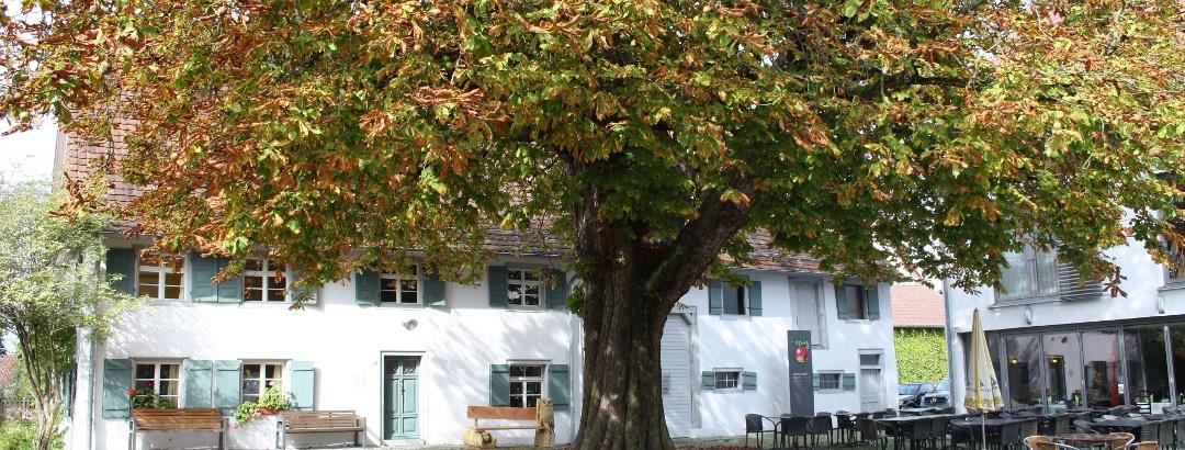 Obstmuseum Frickingen