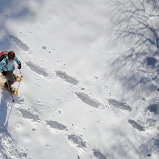 Schneeschuhwanderung in Scheffsnoth / Lofer