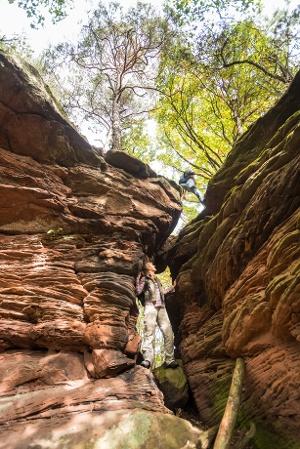 Der Falkenstein (Foto: Jacques Noll, Quelle: Tourist-Info-Zentrum Pfälzerwald)
